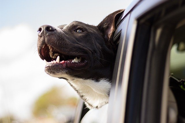 dog in car window showing benefits of car ownership